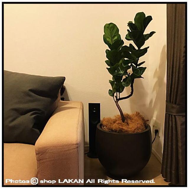 エルム ファイバーセメント製 植木鉢 エッグ40