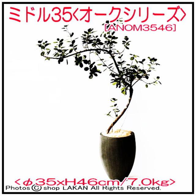 オーク ファイバーセメント製 植木鉢 ミドル35