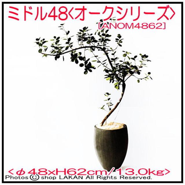 オーク ANOM4862 セメント 植木鉢 ミドル