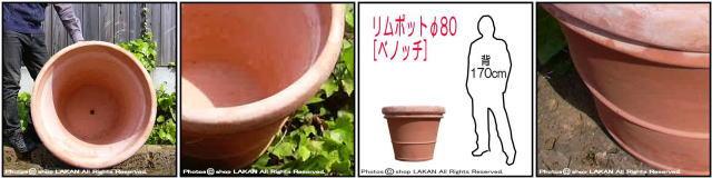 高級 ベノッチ 高品質 リムポット 輸入 テラコッタ植木鉢